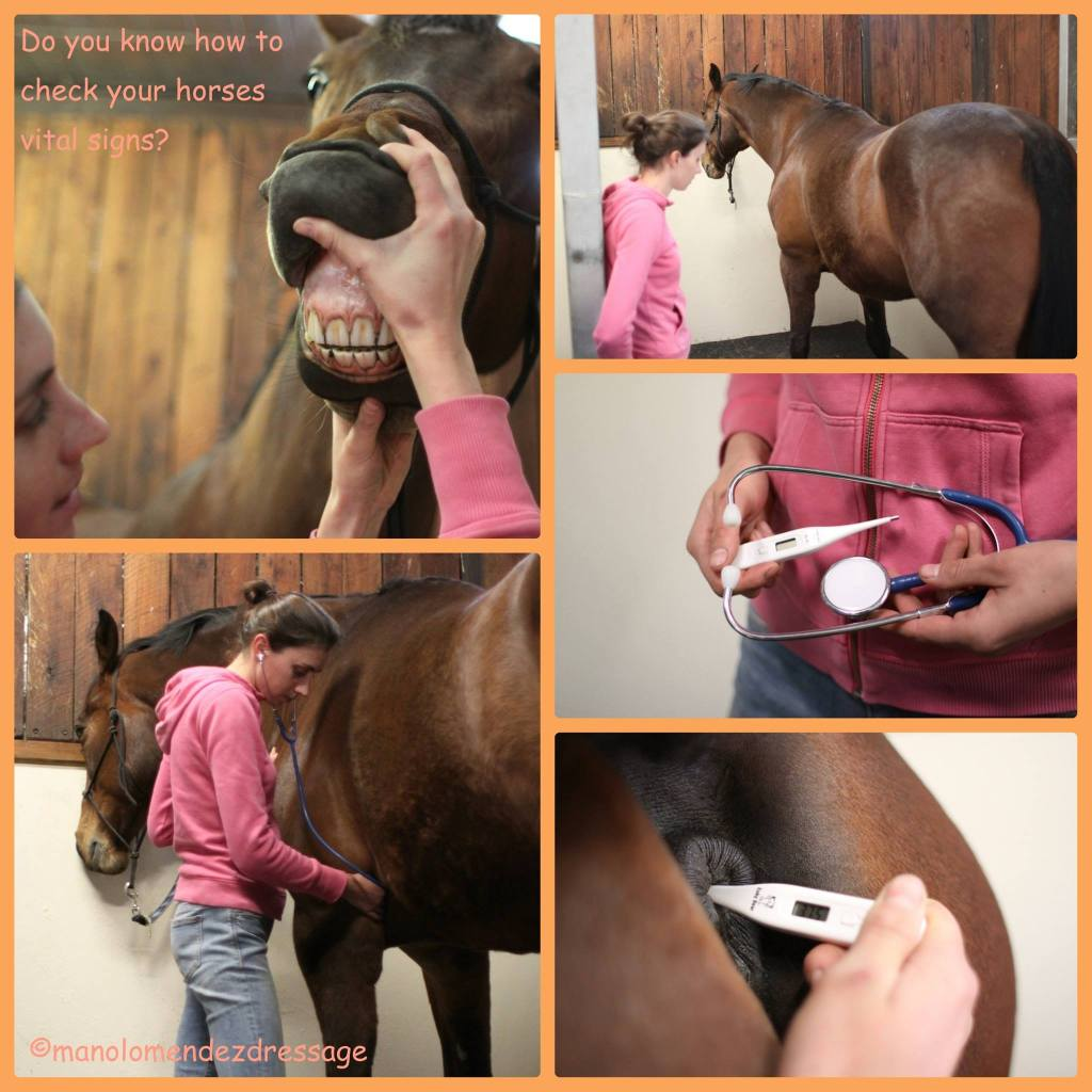 Do you know how to take your horse's vital signs?