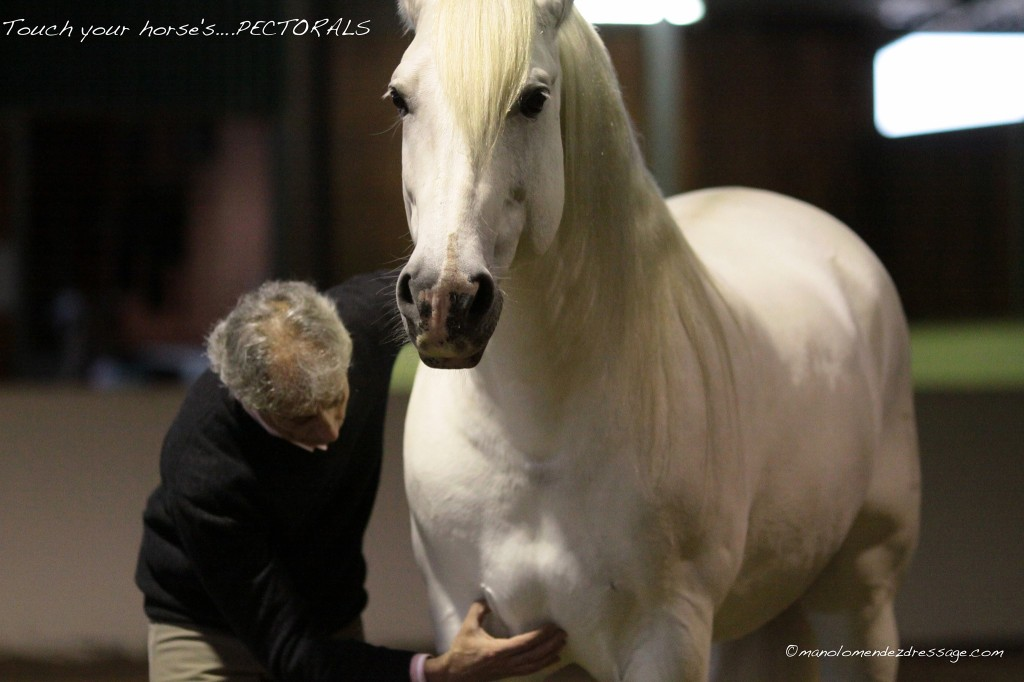 Manolo will demonstrate hands-on, in-hand and ridden techniques for keeping your horse pain free.