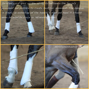 Manolo Mendez Dressage In-Hand Notes 2011