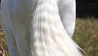 What does your horse's tail tell you?