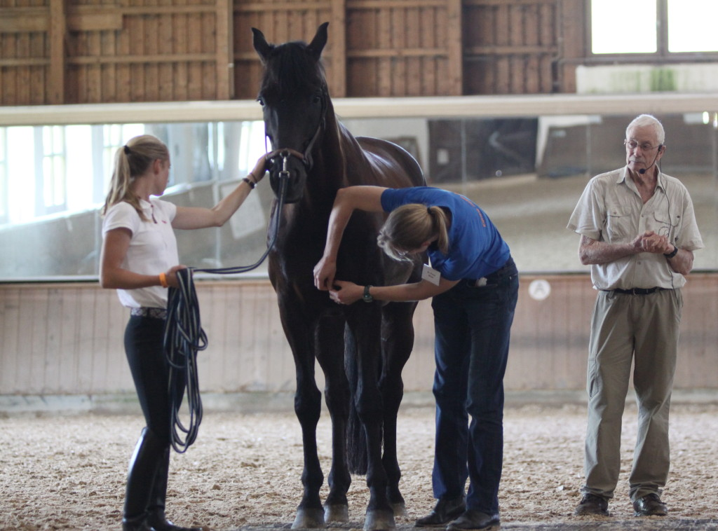 Dr. Fiona Mead alongside Dr. Kerry Ridgway, using acupuncture to treat a horse using Dr. Kerry Ridgway's method during the Equine Wellness 2015 Symposium in Bavaria, Germany