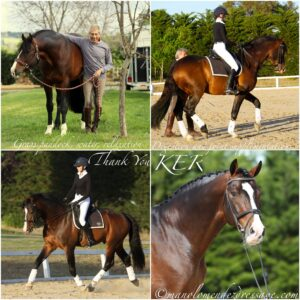 Manolo Mendez Dressage_Blog Number 4