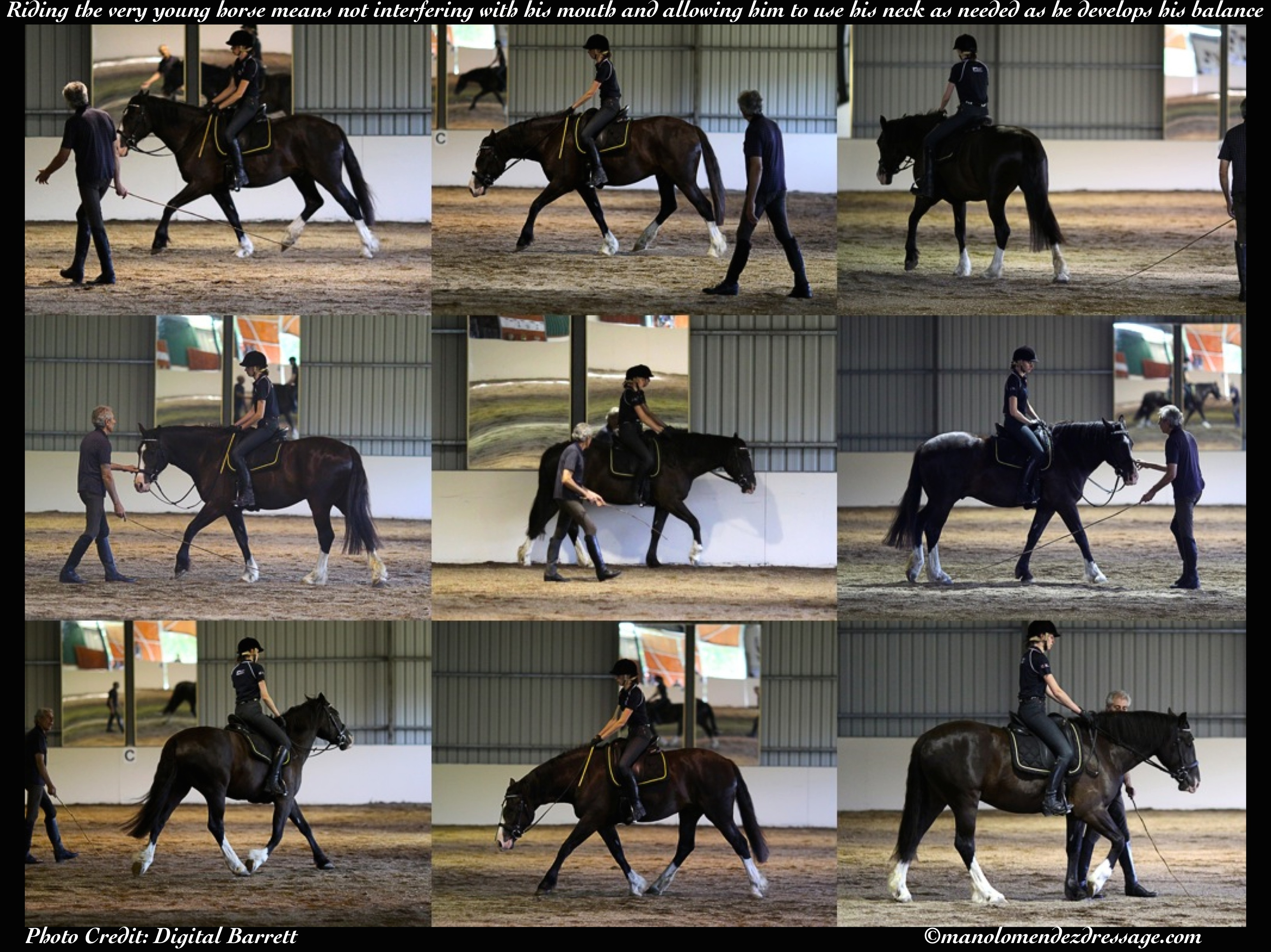 Balance &Rhythm in the Young Horse: Essential to Forward and Self ...