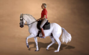Online Video Dressage Training