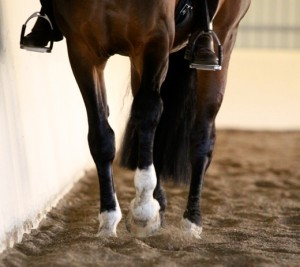 Close up view of a travers on 3 not 4 tracks. Clint's shoulders are on the track. His hindquarters are slightly to the inside of the arena. The outside hind foot (wall side) is aiming to step in the track of the inside fore hoof.